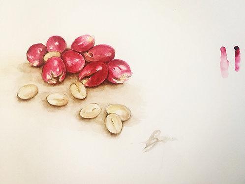 coffee - MOUNTAIN TOPS / beans 250g