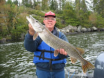 Rainy Lake Northern Pike