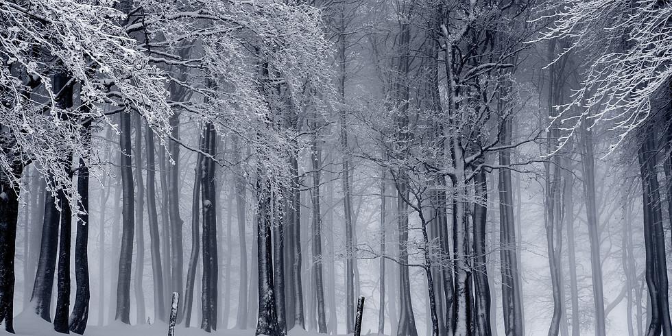 December Winter Solstice Session