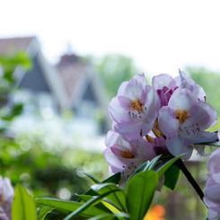 Location Photography for Windlesham Manor Crowborough