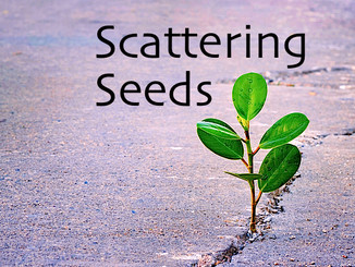 Scattering Seeds
