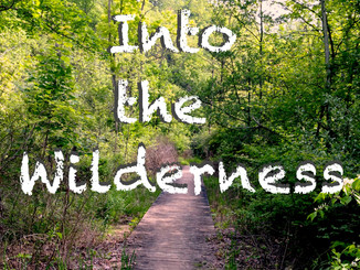 Into the wilderness...