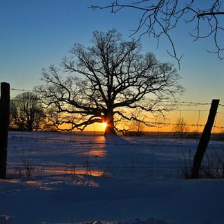 SUN vs. TREE