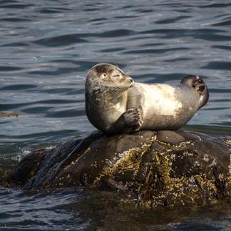 St. Lawrence Seaway Seal
