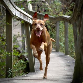 Run, Dog, Run!