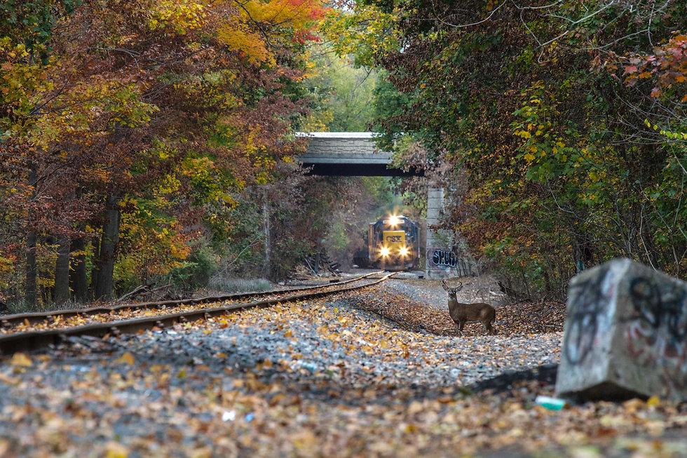 Train Deer.jpg