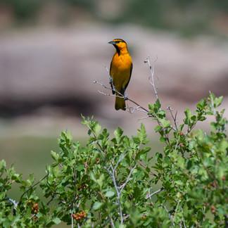 Fancy Birdy!