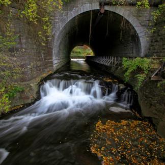 Corbetts Glen Nature Park