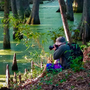 Cypress Swamp off the Natchez Trace Parkway