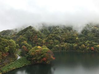 現在の津軽白神湖周辺の紅葉状況です!