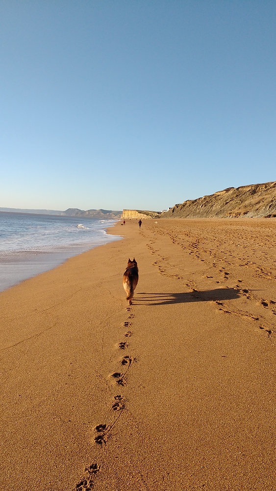 unspoilt dog friendly beaches