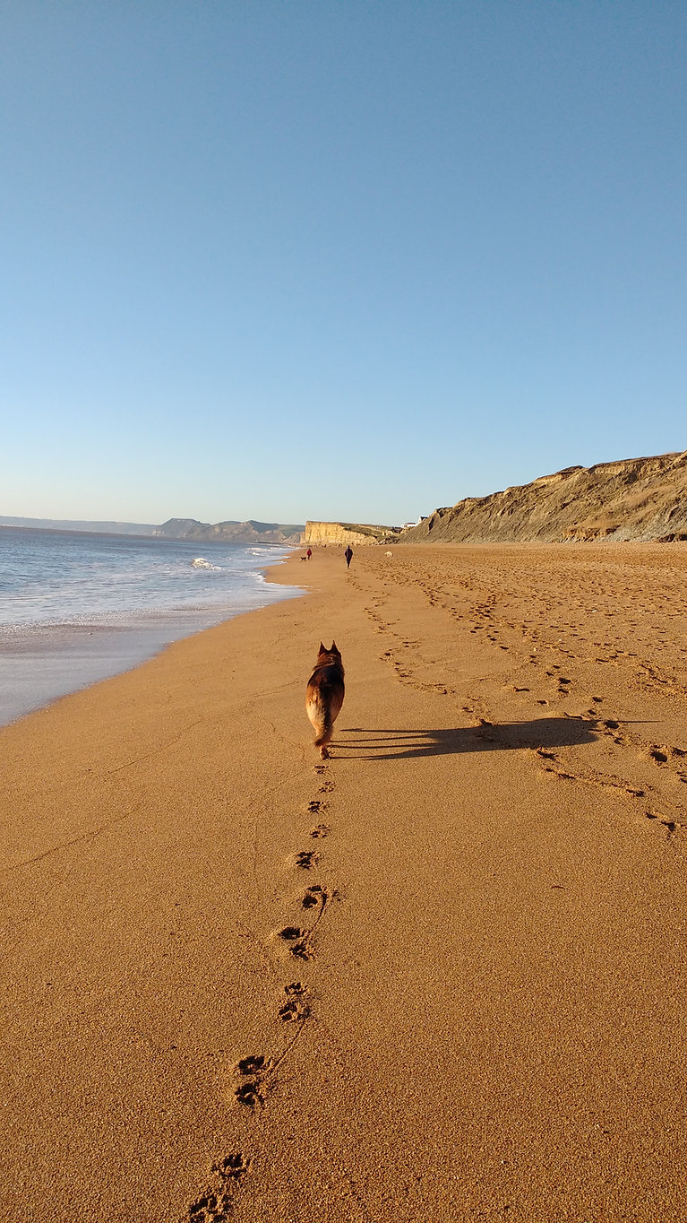 Dorset Beaches