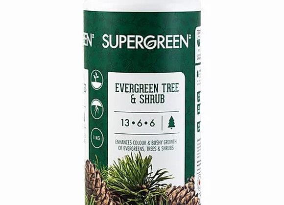 Evergreen Tree and Shrub Fertilizer
