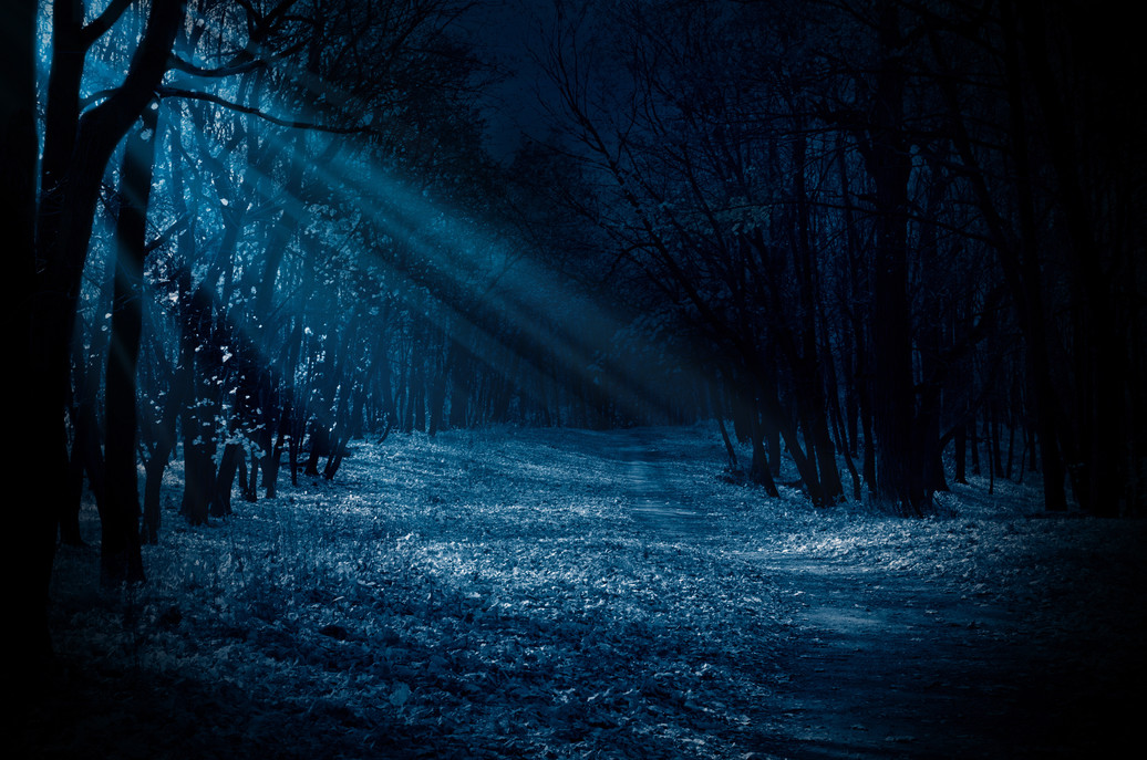 moonlight forest.jpeg