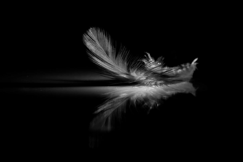 feather shadow.jpeg