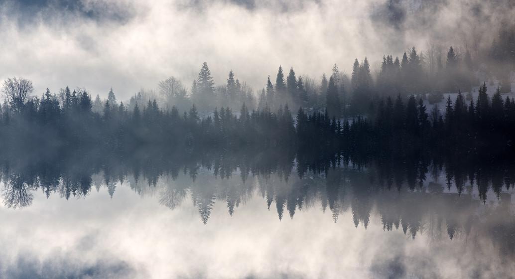 the swan lake.jpeg
