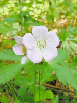 Flowers 5 2014_edited_edited.jpg