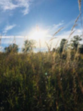 prairie 1.jpg