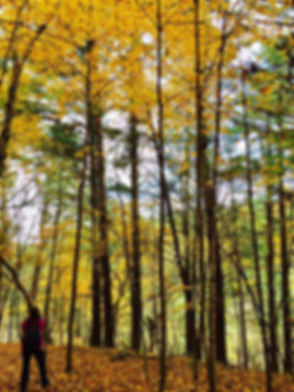 hidden falls hike.jpg