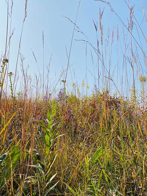Fall Prairie .jpg