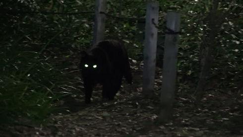 spooky eyes.jpg