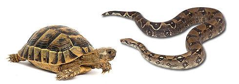turtle_snake_wide.jpg