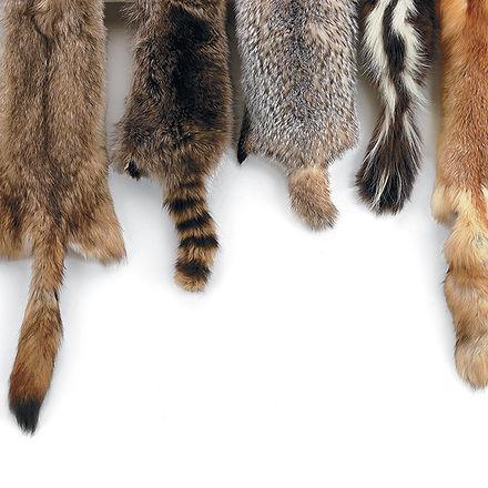 pelts.jpg