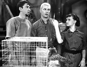 Classic TV Shows - Many Loves of Dobie Gillis, Dwayne Hickman, Bob Denver