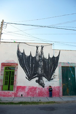 Bat in Mexico