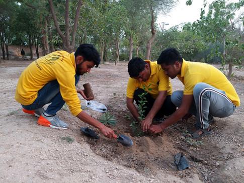 Plantation At Kapil Ashram