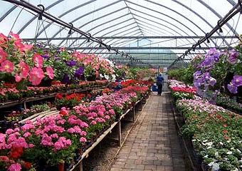 flowers3610.jpg
