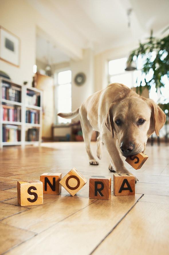 Snoro šuo