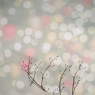 Winter Solstice .png