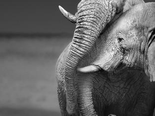 QU'EST CE QUE L'ANIMAL TOTEM?