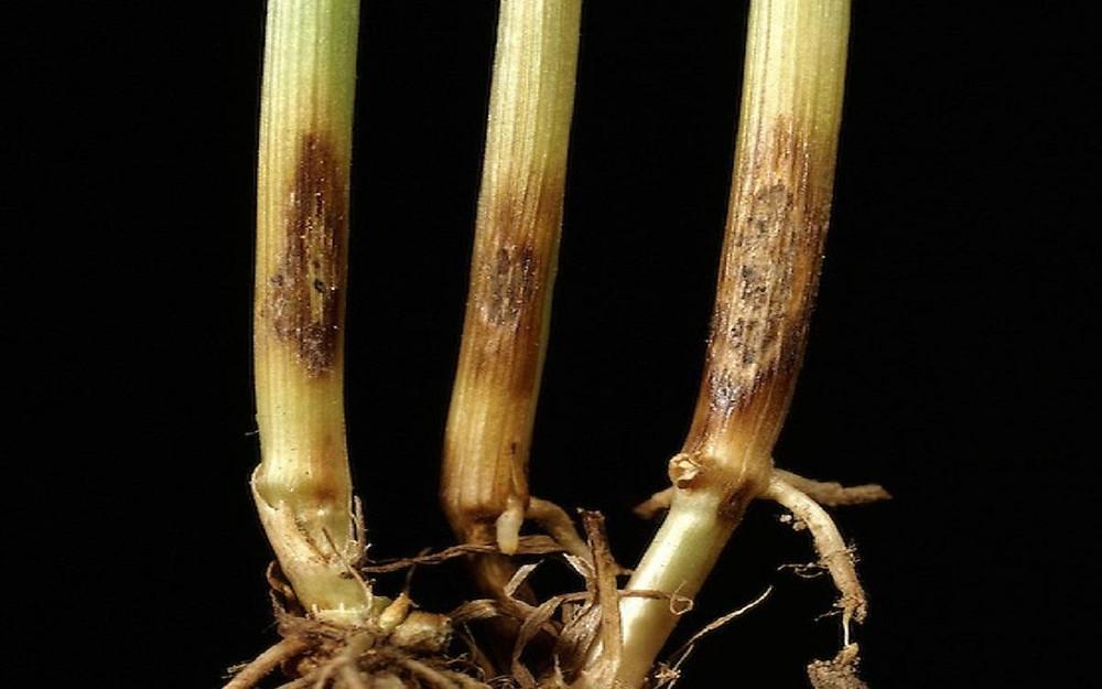Болезнь растений
