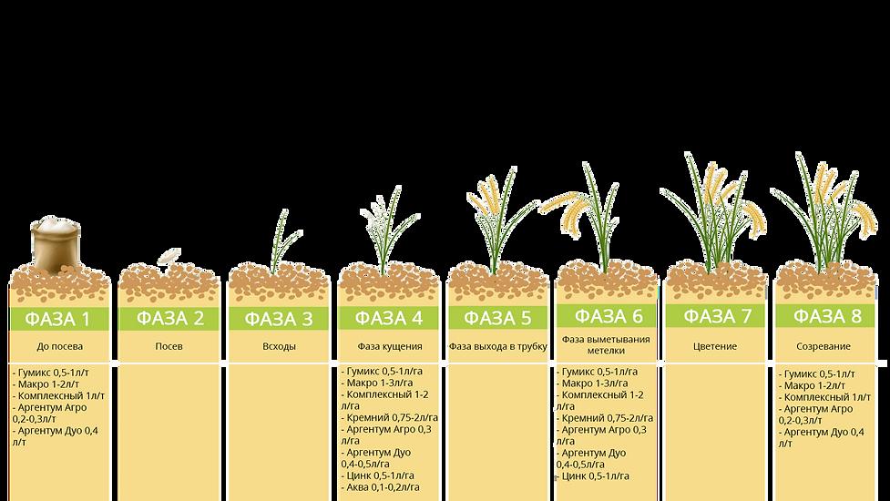 Программа питания рис ЖУСС