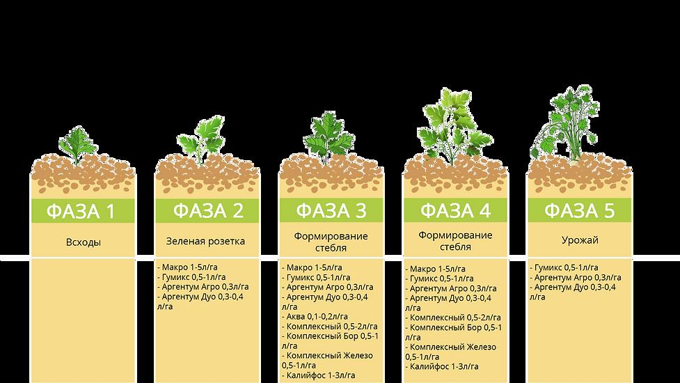Программа питания зелень ЖУСС