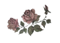 fullrose cutout dim.png
