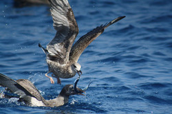 SeaBirds Fishing