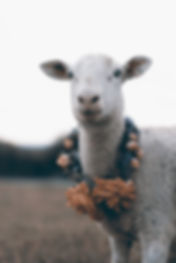 HANNAH MILES_VICTOR LUDORUM_SHEEP.jpg