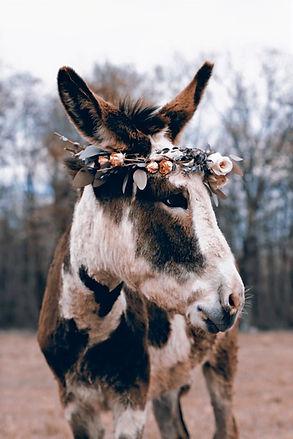 Donkey_edited.jpg