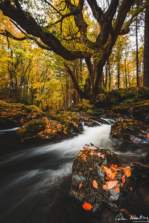 Tollymore Forest. Autumn. Ireland. Colm Keating Photography.