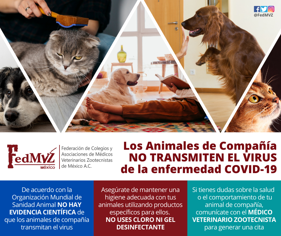 Animales_de_compañía_COVID-19