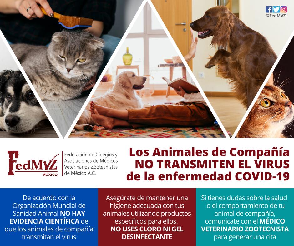 Animales_de_compañía_COVID-19