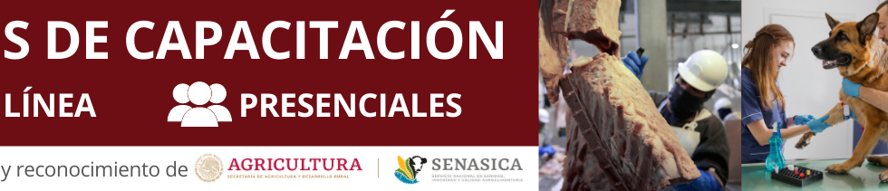 BANNER_CURSOS_DE_CAPACITACIÓN_EN_LÍNEA