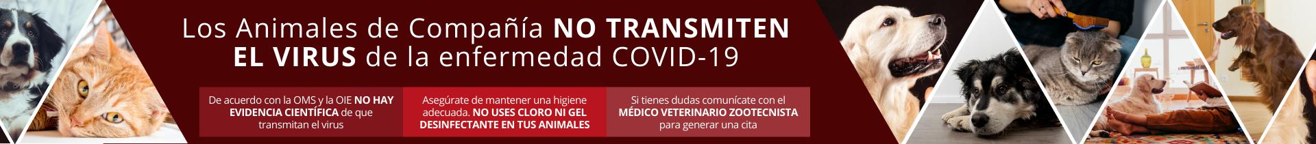 BANNER ANIMALES NO TRANSMITEN COVID (1).