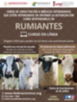 CURSO_RUMIANTES_EN_LÍNEA_JULIO.png