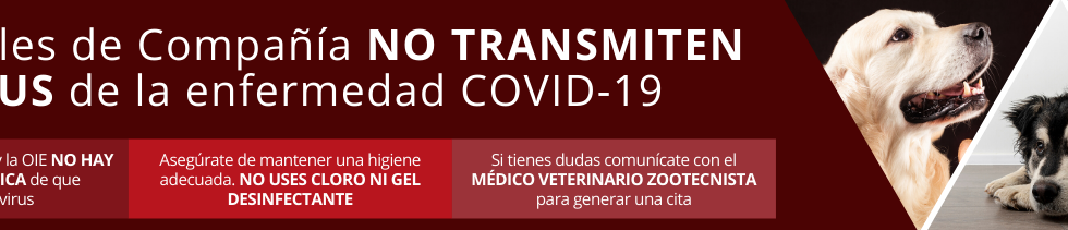 BANNER ANIMALES NO TRANSMITEN COVID.png