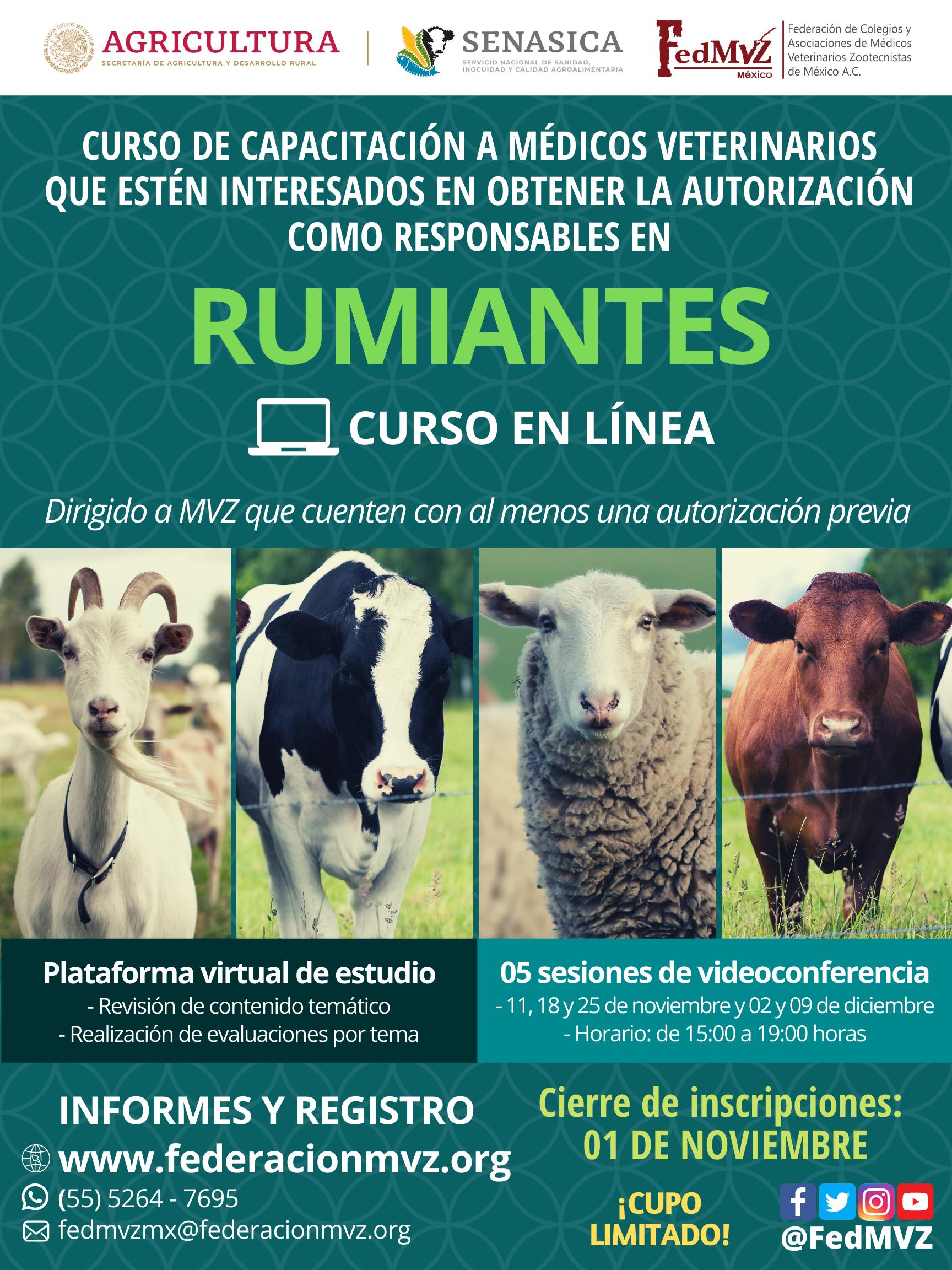CURSO_RUMIANTES_EN_LÍNEA_NOVIEMBRE