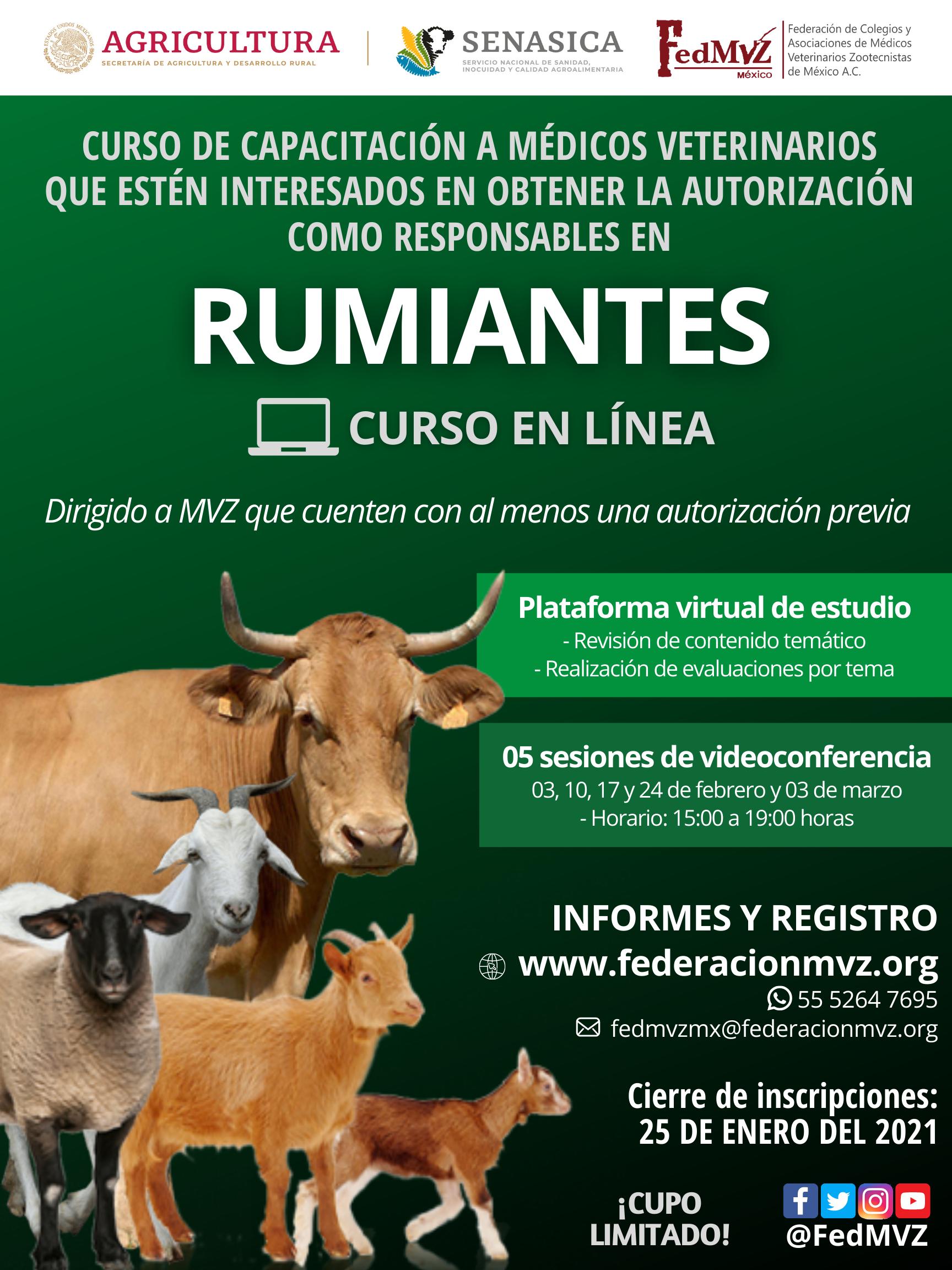 CURSO RUMIANTES EN LÍNEA FEBRERO 2021